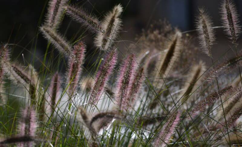 Add movement to your garden with beautiful native and ornamental grass